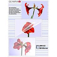 Olympia Laminierfolien DIN A3, 50Stk, 80mic